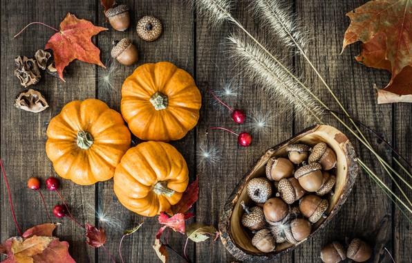Картинка осень, листья, тыква, желуди
