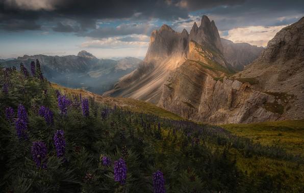 Картинка цветы, горы, радуга, Альпы
