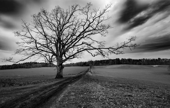 Картинка дорога, поле, дерево