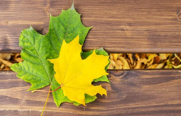 Картинка осень, листья, дерево, colorful, клен, wood, autumn, leaves, осенние, maple