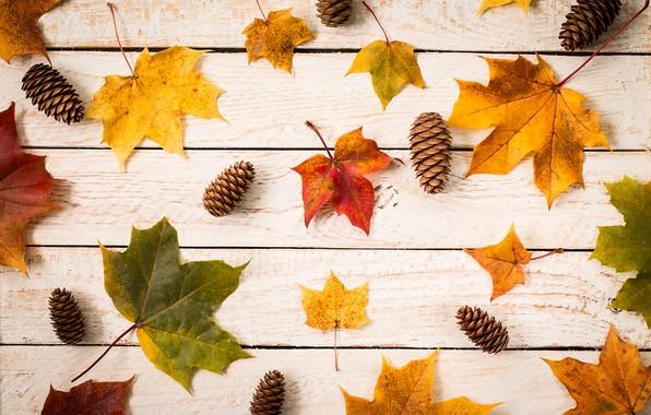 Картинка осень, листья, фон, colorful, клен, wood, autumn, leaves, maple