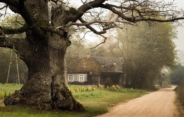 Картинка дорога, дом, дерево
