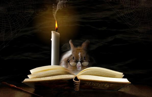 Картинка волшебство, свеча, паутина, кролик, очки, книга, magic, rabbit, book, glasses, candle, spider web, alberto bissacco