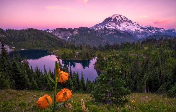 Картинка лес, лето, небо, трава, облака, цветы, горы, озеро, отражение, скалы, холмы, склоны, вершины, лилии, высота, …