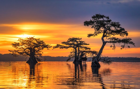 Картинка sunrise, trio, swamp, cypress trees