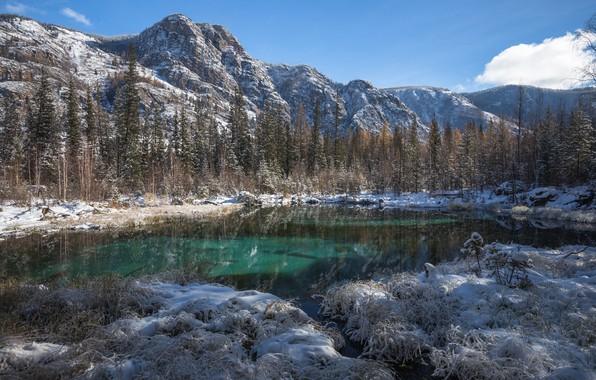 Картинка зима, лес, трава, снег, деревья, пейзаж, горы, природа, озеро, Голубое, берега, Алтай, пихты, Виктор Зайцев, …