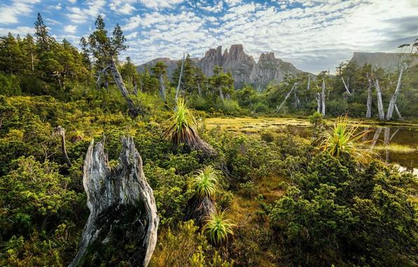 Картинка небо, деревья, пейзаж, горы, природа, скалы, красота, день