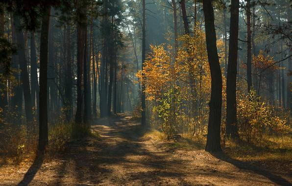 Картинка дорога, осень, лес, лучи, свет, деревья, ветки, туман, листва, дорожка, тени, дымка, сосны, аллея, тропинка, …
