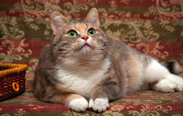 Картинка кошка, трава, глаза, кот, взгляд, фон, покрывало, мордочка, зеленые, лежит, корзинка, гобелен, смотрит вверх, пятнистая, …