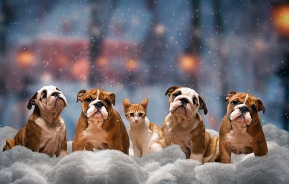 Картинка зима, кошка, собаки, взгляд, снег, деревья, город, огни, поза, уют, котенок, настроение, транспорт, улица, красота, …