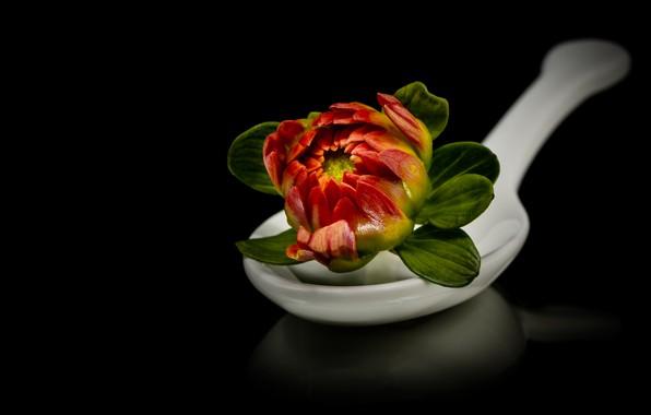 Картинка цветок, отражение, ложка, черный фон, композиция