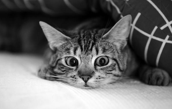 Картинка глаза, кот, усы, eyes, cat, mustache, Antje Wenner-Braun