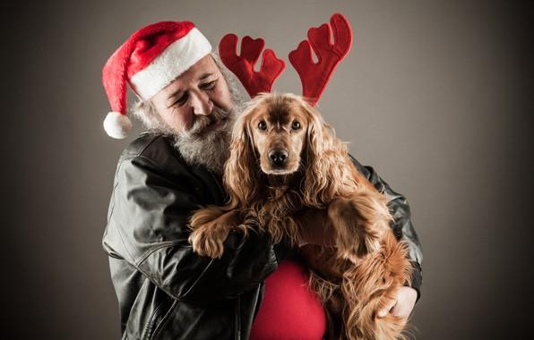 Картинка фон, настроение, праздник, шапка, собака, куртка, Рождество, Новый год, рога, чёрная, борода, Дед Мороз, красная, …