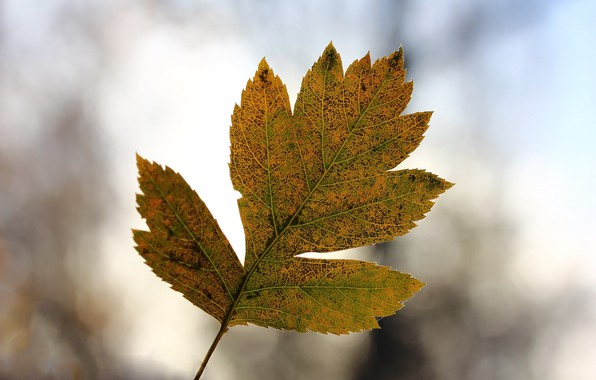 Картинка осень, лист, фон