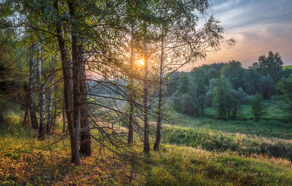 Картинка поле, осень, лес, небо, солнце, свет, деревья, ветки, даль, вечер, дымка, березы, берёзы, загород, осенняя …