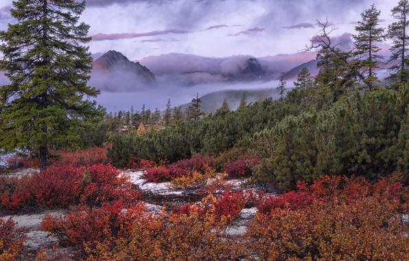 Картинка осень, деревья, пейзаж, горы, природа, туман, растительность, кустарники, Владимир Рябков, Колыма