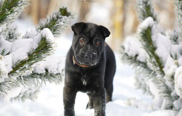 Картинка зима, друг, ель, собака, щенок