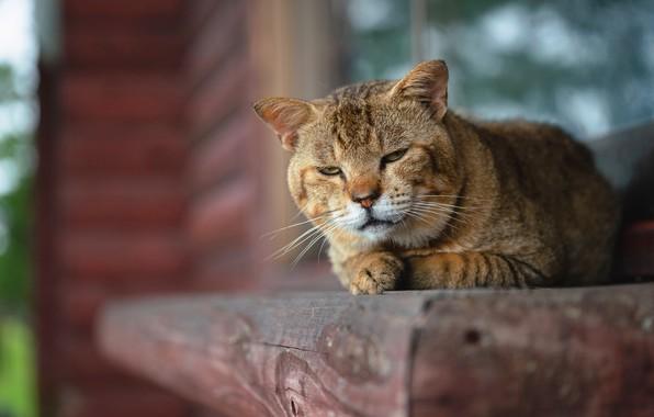 Картинка кошка, кот, взгляд, морда, поза, дом, портрет, лапы, окно, лежит, деревянный, подоконник, полосатый, выражение, боке, …