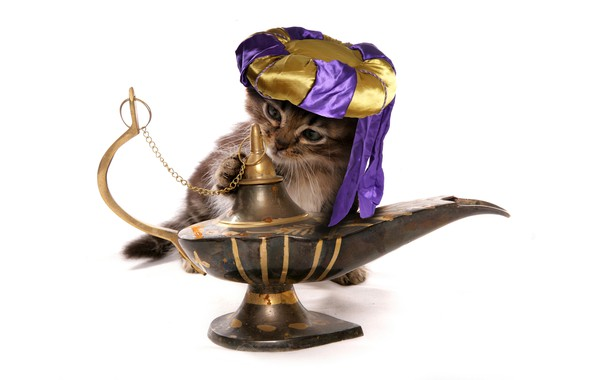 Картинка кот, лампа, ситуация, юмор, белый фон, джин, котёнок, тюрбан, головной убор