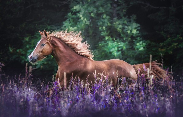 Картинка поле, цветы, конь, лошадь, луг, грива