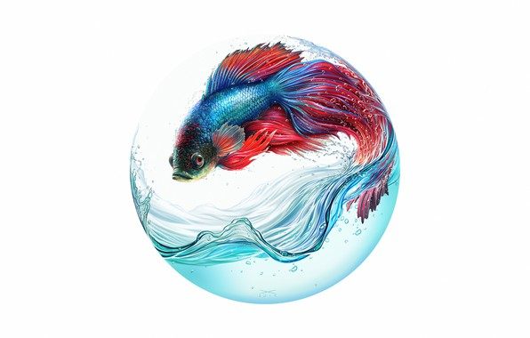 Картинка Вода, Цвет, Минимализм, Круг, Рыбка, Рыба, Стиль, Fish, Арт, Art, Water, Style, Color, Minimalism, Circle, …