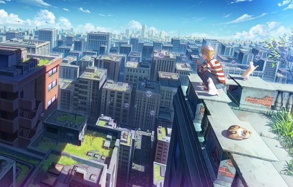 Картинка мальчик, мыльные пузыри, котята, вид сверху, на крыше, крыши домов, полосатая кофта, летний день, панорама …