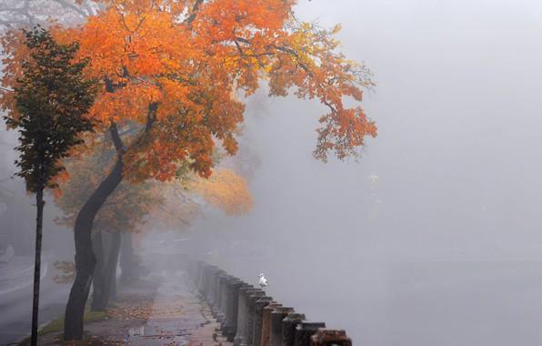 Картинка чайки, набережная Невы, Санкт Петербург, в тумане, осенние деревья