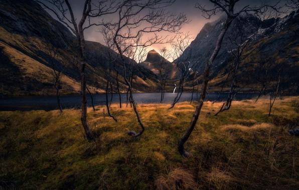 Картинка осень, трава, деревья, горы, ветки, стволы, склоны, кривые, сухая