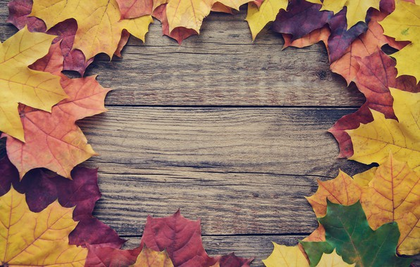 Картинка осень, листья, фон, доски, colorful, клен, wood, autumn, leaves, frame, maple