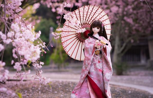 Картинка зонтик, японка, кукла, сакура, кимоно