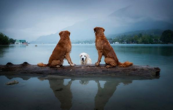 Картинка собаки, небо, взгляд, пейзаж, горы, природа, поза, туман, озеро, отражение, дерево, берег, купание, три, бревно, …