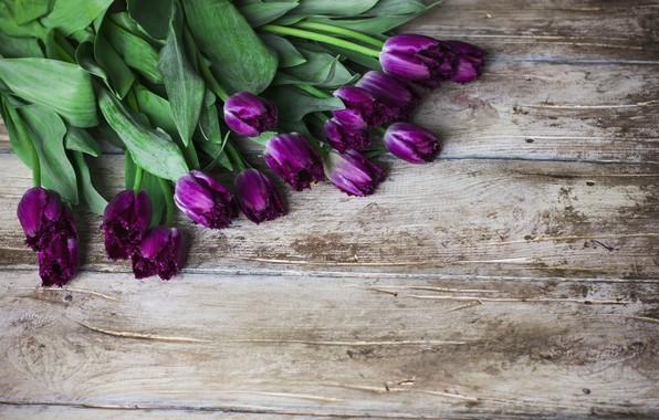 Картинка цветы, букет, фиолетовые, тюльпаны, wood, flowers, tulips, purple