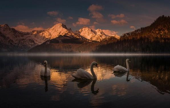 Картинка закат, горы, озеро, лебеди, Friedrich Beren