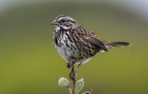Картинка птица, ветка, пташка