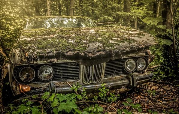 Фото обои машина, лес, лом, хлам