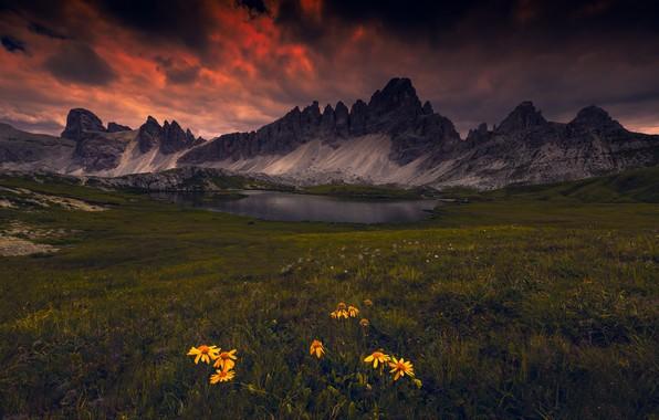 Картинка цветы, горы, озеро, Доломиты
