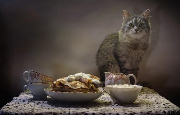 Картинка кот, стол, животное, чайник, чашки, натюрморт, блины, салфетка, сметана, Ковалёва Светлана, Светлана Ковалёва