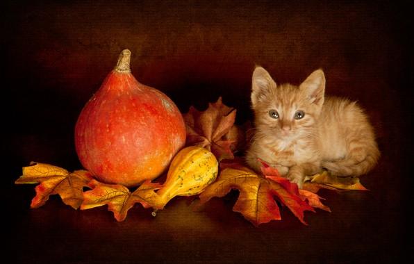 Картинка осень, кошка, взгляд, листья, поза, темный фон, котенок, урожай, малыш, рыжий, мордочка, тыквы, лежит, тыква, …