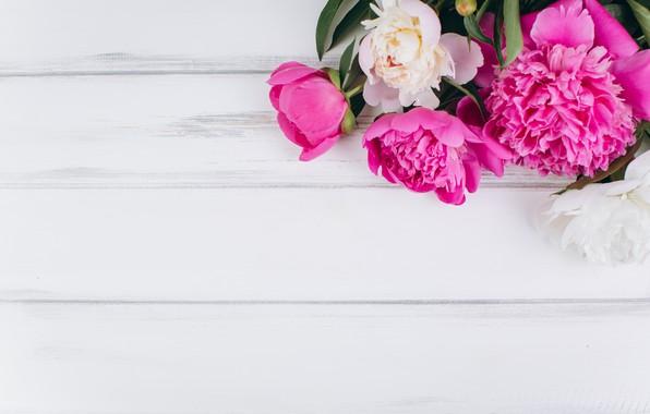 Картинка цветы, розовые, white, белые, wood, pink, flowers, пионы, peonies