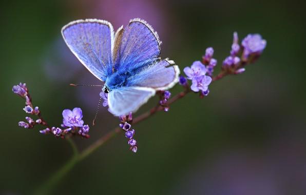 Картинка макро, веточка, бабочка, цветки, боке