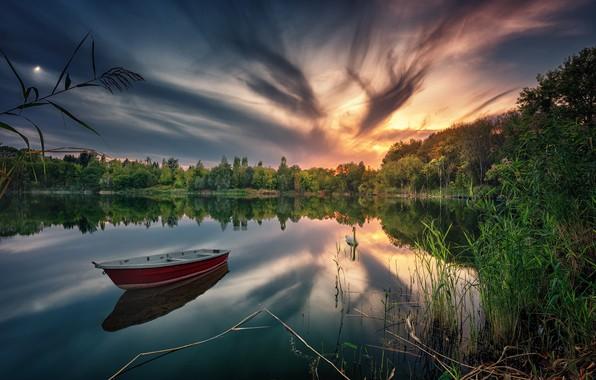 Картинка лес, закат, озеро, отражение, лодка, лебедь