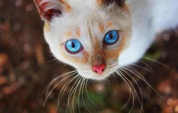 Картинка глаза, кот, фон, мордашка