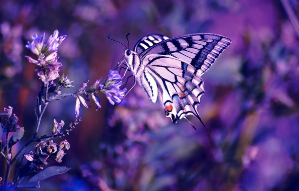 Картинка flower, photography, nature, macro, insect, Butterfly, purple flower
