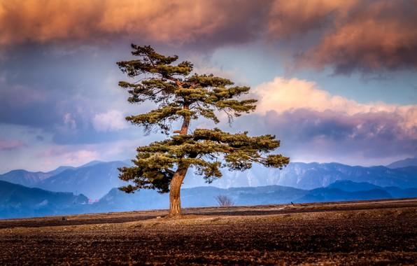 Картинка поле, небо, природа, дерево