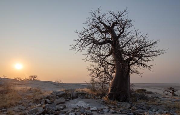 Картинка Sunset, botswana, Kubu Island, boabab