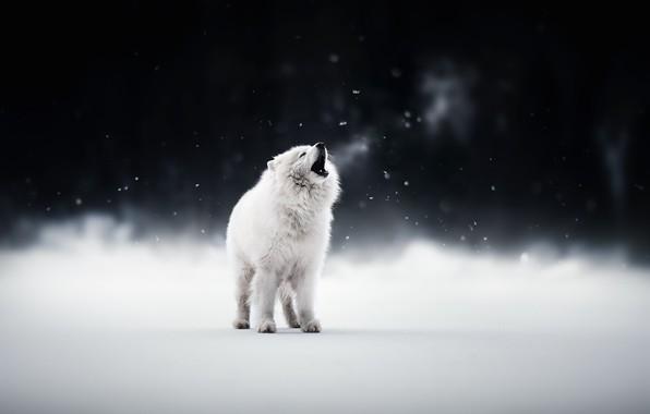 Картинка зима, друг, собака