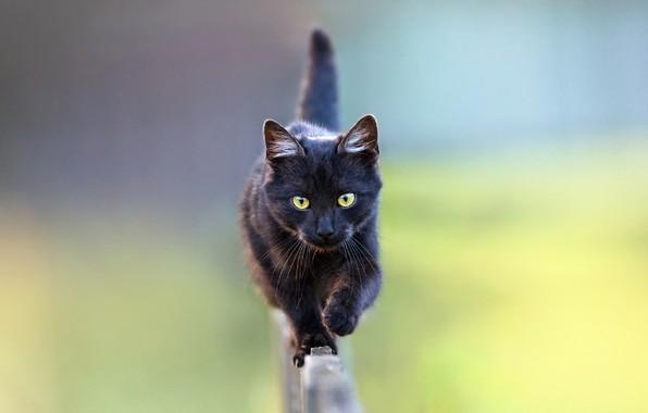 Картинка размытый задний фон, на заборе, черная кошка