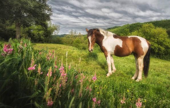 Картинка зелень, поле, лето, облака, деревья, цветы, природа, настроение, конь, холмы, поляна, лошадь, склон, пастбище, луг, …