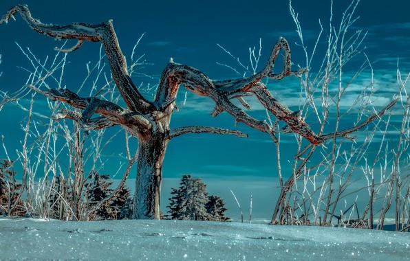 Картинка зима, снег, ночь, дерево, night, winter, snow, tree
