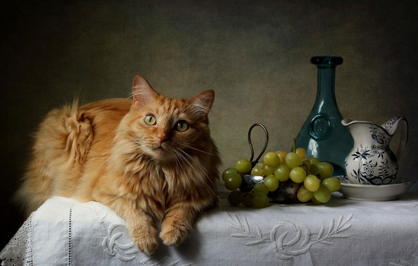 Картинка кот, рыжий, виноград, ваза